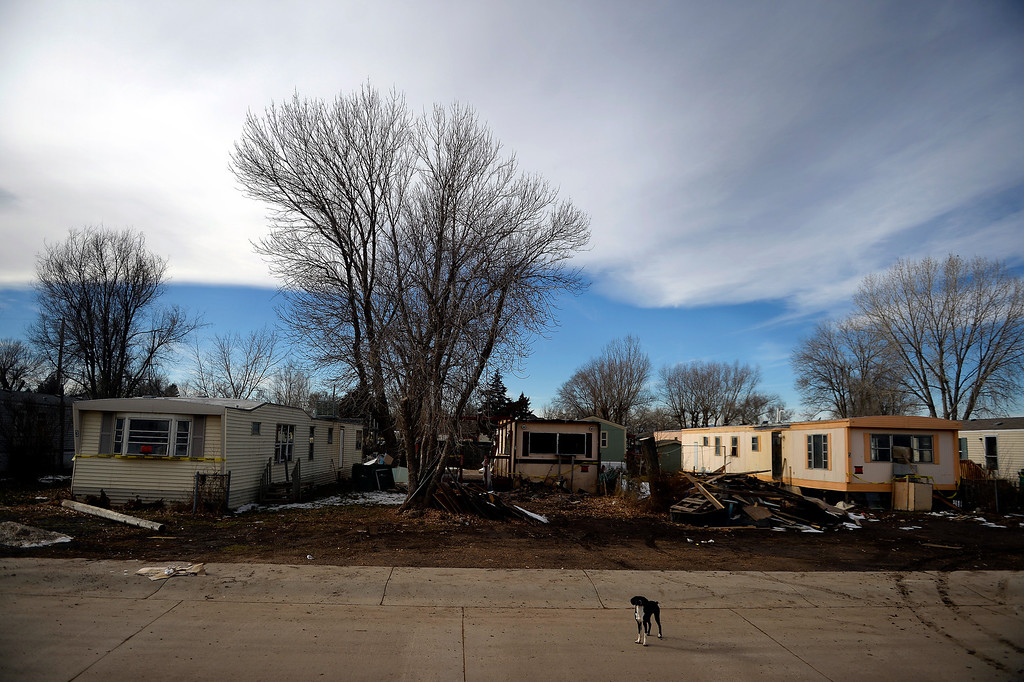 . MILLIKEN, CO - DECEMBER 18: A dog stands guard at the Evergreen Mobile Home Park. Residents of the mobile home park say that the city of Milliken has not done enough to assist in the rebuilding of the 33-unit residential sub division that was struck hard by recent floods that ravaged much of northern Colorado. (Photo by AAron Ontiveroz/The Denver Post)