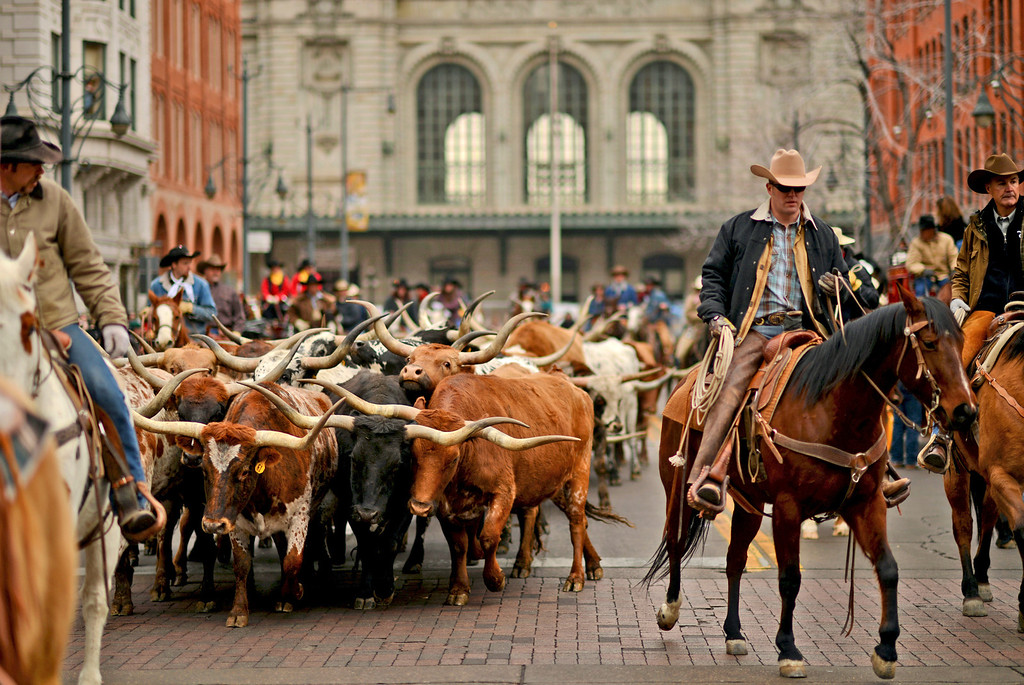 . Cowboys escort the Texas Longhorns for the celebration of 107th National Western Stock Show Kick-Off Parade at Downtown Denver on Thursday, Denver, CO, January 10, 2013.  Hyoung Chang, The Denver Post