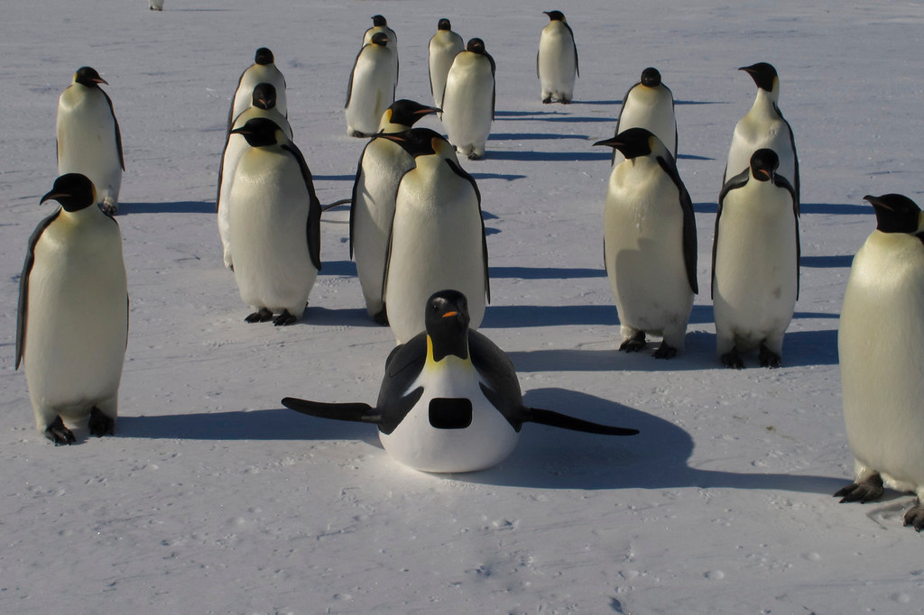 . An Emperorcam with emperor penguins used in the filming of, �Penguins: Waddle All the Way,� which premiers Nov. 23 on Discovery. Jane Lynch narrates this two-hour special, a Discovery/BBC co-production from award-winning filmmaker John Downer. (Photo by Frederique Olivier/JDP World All Media)