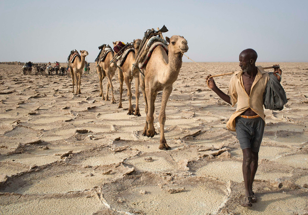 . A man walks with his camels through the Danakil Depression, northern Ethiopia April 22, 2013. Once the caravan find a suitable place to mine salt, they extract, shape and pack as many salt slabs as possible before starting their two-day journey to the town of Berahile. The Danakil Depression in Ethiopia is one of the hottest and harshest environments on earth, with an average annual temperature of 94 degrees Fahrenheit (34.4 Celsius). For centuries, merchants have travelled there with caravans of camels to collect salt from the surface of the vast desert basin. The mineral is extracted and shaped into slabs, then loaded onto the animals before being transported back across the desert so that it can be sold around the country. Picture taken April 22, 2013. REUTERS/Siegfried Modola