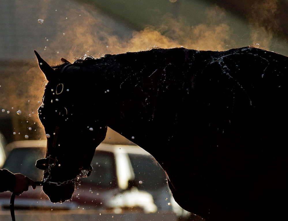 . A horse gets a bath after a morning workout at Churchill Downs Thursday, May 1, 2014, in Louisville, Ky. (AP Photo/Charlie Riedel)