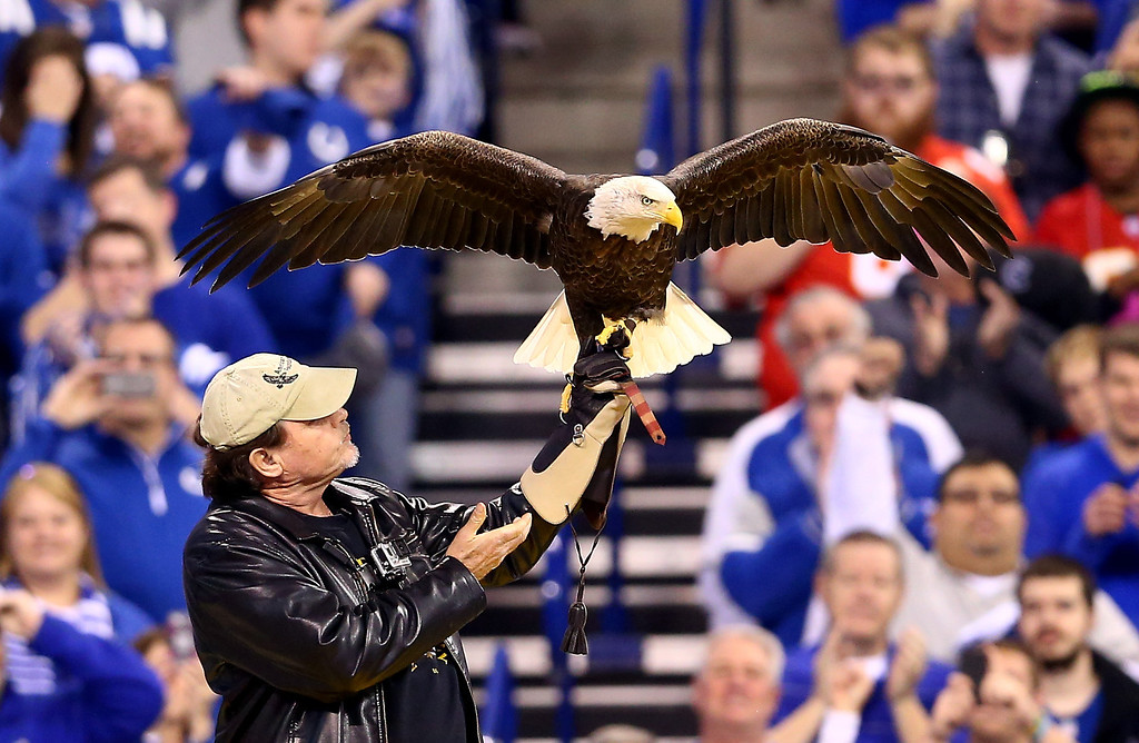 . INDIANAPOLIS, IN - JANUARY 04: A Bald Eagle is seen prior to a Wild Card Playoff game between the Indianapolis Colts and the Kansas City Chiefs at Lucas Oil Stadium on January 4, 2014 in Indianapolis, Indiana.  (Photo by Andy Lyons/Getty Images)