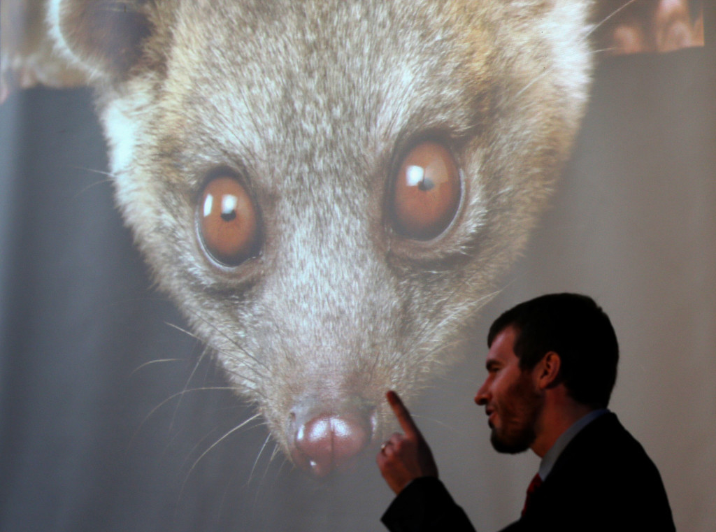 . Kristofer Helgen, curator of mammals at the Smithsonian\'s National Museum of Natural History, speaks as he introduces olinguito, a new species of Carnivore he and his team have newly discovered August 15, 2013 at the Smithsonian Castle in Washington, DC. It took Helgen and his team on a journey from museum cabinets in Chicago to cloud forests in South America to discover and confirm the new species of olinguito (Bassaricyon neblina), which has been mistakenly identified for more than 100 years. It\'s also the first carnivore species to be discovered in the American continents in 35 years.  (Photo by Alex Wong/Getty Images)