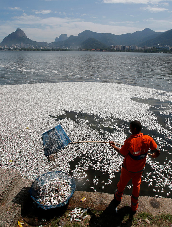 . A municipal worker collects dead fish at the Rodrigo de Freitas lagoon in Rio de Janeiro, March 13, 2013.  REUTERS/Sergio Moraes