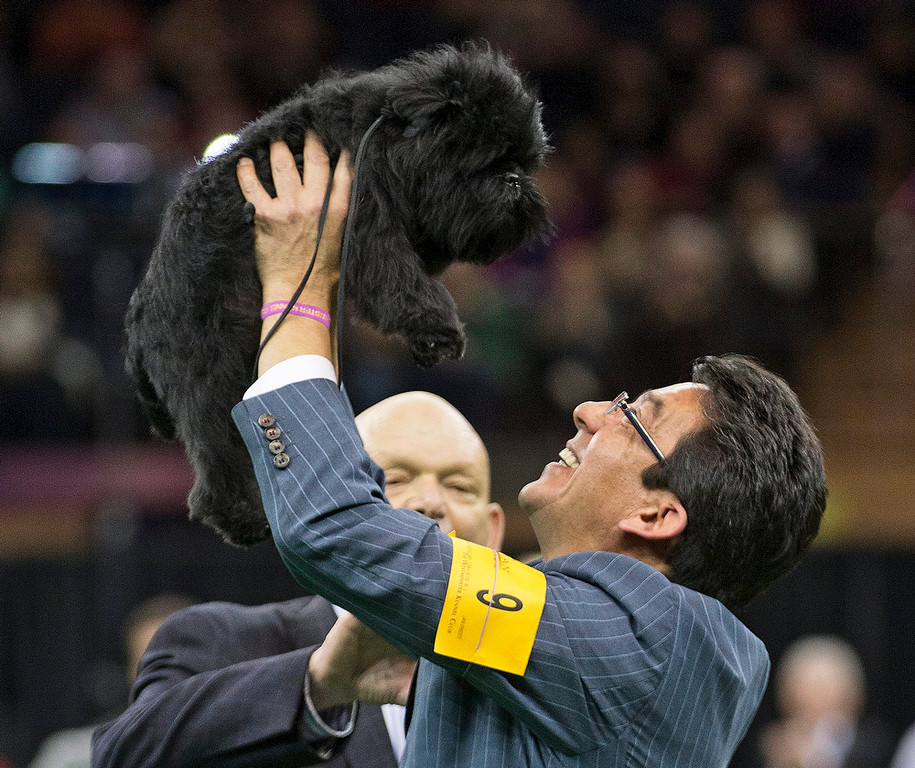 . Ernesto Lara celebrates with Banana Joe, an affenpinscher, who won Best in Show, during the 137th Westminster Kennel Club dog show, Tuesday, Feb. 12, 2013, at Madison Square Garden in New York. (AP Photo/Frank Franklin II)