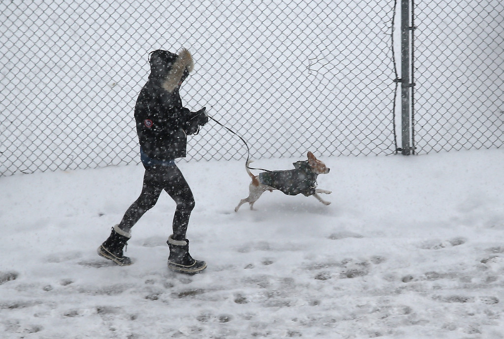. A woman runs her dog during a snowstorm on January 21, 2014 in New York City. Areas of the Northeast are predicted to receive up to a foot of snow in what may be the biggest snowfall of the season so far.  (Photo by John Moore/Getty Images)