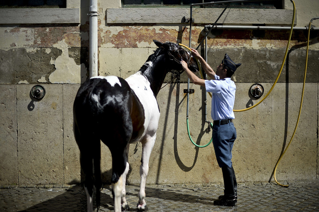 . A cavalryman showers his horse after taking part in a training session at the National Guard\'s third squad facilities at Braco de Prata in Lisbon, on August 16, 2013. The cavalry of Portugal\'s National Guard has a unique mounted brass band which was created in 1942. It features various instruments including cavalry trumpets, flugelhorn and kettledrum. The cavalry, which consists of 130 white or piebald horses and 27 riders, take part in various official ceremonies and touristic events, including the Change of Guards at Belem\'s National Palace.   PATRICIA DE MELO MOREIRA/AFP/Getty Images