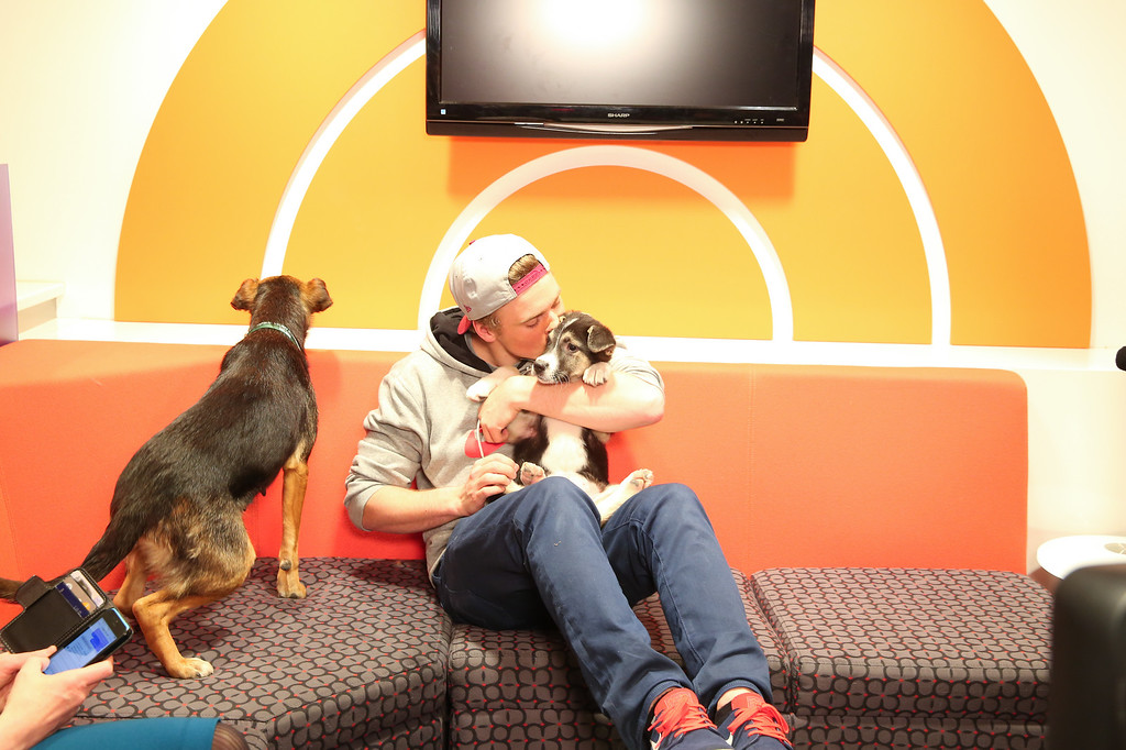 . In this image released on Friday, March 14, 2014, Sochi Dogs make an appearance on the Today Show with owner Winter Olympic silver medalist Gus Kenworthy.  (Christopher Lane/AP Images for Humane Society International)