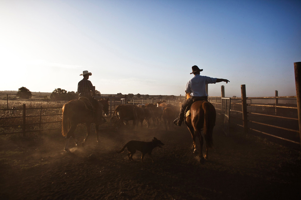 . Nadav (R), the chief cowboy of the Yonatan herd, and Alon, tend cattle on a ranch just outside Moshav Yonatan, a collective farming community, about 2 km (1 mile) south of the ceasefire line between Israel and Syria in the Golan Heights May 21, 2013. REUTERS/Nir Elias