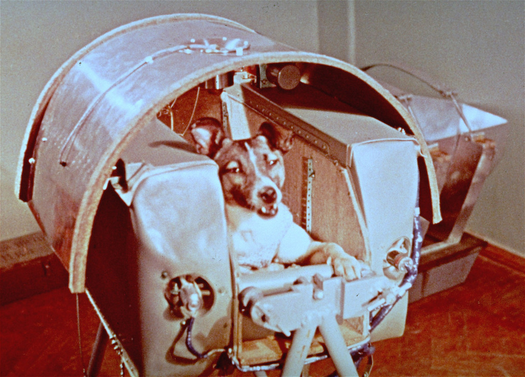 . A view of Laika, Nov., 1957, the female dog the Russians say is riding in outer space as a passenger aboard Sputnik II. Just a month after the Soviet Union stunned the world by putting the Earth\'s first artificial satellite into orbit, it boasted a new victory _ a much bigger satellite carrying a mongrel dog called Laika. The mission, 50 years ago Saturday, helped pave the way for human flight. (AP Photo/NASA, file)