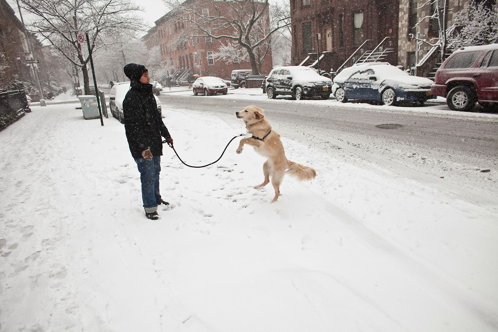 . A woman plays with her dog in the snow in the Prospect Heights section on March 8, 2012 in Brooklyn borough of New York City. The storm part of the same system that pummeled the Midwest is expected to dump one to two inches of snow in the New York Metro area.  (Photo by Ramin Talaie/Getty Images)