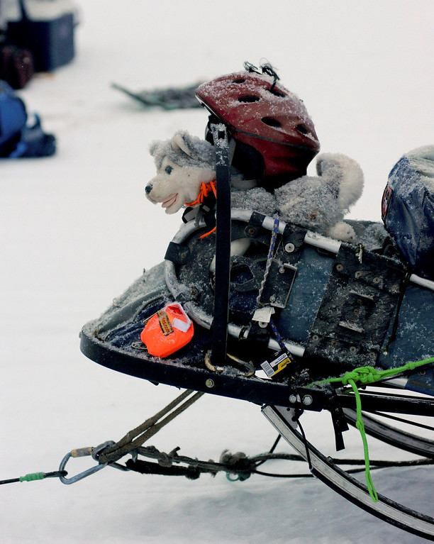 . A stuffed toy husky wearing a helmet sits on the front of the sled of Nicolas Petit at the Nikolai checkpoint during the 2014 Iditarod Trail Sled Dog Race on Tuesday, March 4, 2014, in Nikolai, Alaska. (AP Photo/The Anchorage Daily News, Bob Hallinen)
