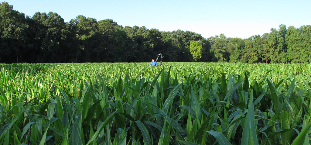 . Timothy Day navigates a corn field on his tractor in Fuquay-Varina, N.C., on Saturday, Aug. 24, 2013. The Virginia man travels the country for Maize Quest, using GPS equipment to cut out elaborate mazes for the fall tourist season. (AP Photo/Allen G. Breed)