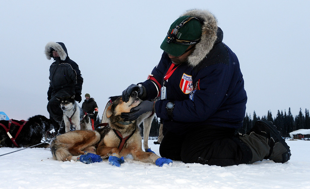 . Veterinarian Bruce Nwadike checks the dogs of musher Mike Williams Jr. at the Nikolai checkpoint during the 2014 Iditarod Trail Sled Dog Race on Tuesday, March 4, 2014, in Nikolai, Alaska. (AP Photo/The Anchorage Daily News, Bob Hallinen)