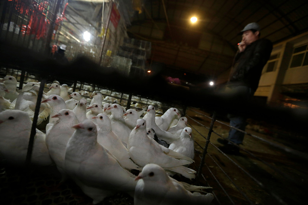 . A vendor smokes next to his pigeons at a poultry market after the market was asked to be closed from Saturday onwards, in Wuhan, Hubei province, April 5, 2013. The new strain of bird flu has infected 16 people in China, all in the east of the country. Six people have died, and the outbreak has spread concern overseas and sparked a sell-off in airline shares in Europe and Hong Kong. Picture taken April 5, 2013. REUTERS/Stringer