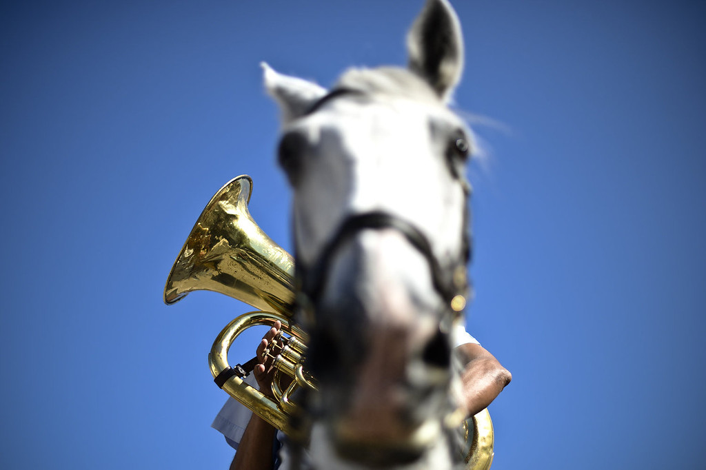 . A member of the Portuguese National Guard\'s mounted brass band takes part in a training session at the National Guard\'s third squad facilities at Braco de Prata in Lisbon, on August 16, 2013. The cavalry of Portugal\'s National Guard has a unique mounted brass band which was created in 1942. It features various instruments including cavalry trumpets, flugelhorn and kettledrum. The cavalry, which consists of 130 white or piebald horses and 27 riders, take part in various official ceremonies and touristic events, including the Change of Guards at Belem\'s National Palace.   PATRICIA DE MELO MOREIRA/AFP/Getty Images