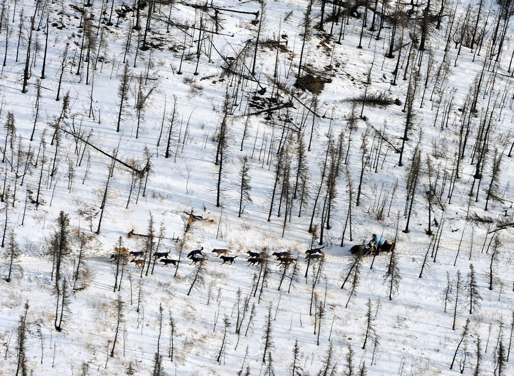 . Four-time champion Martin Buser heads down the trail on his way to the Nikolai checkpoint in Alaska during the Iditarod Trail Sled Dog Race on Tuesday, March 5, 2013. (AP Photo/The Anchorage Daily News, Bill Roth)