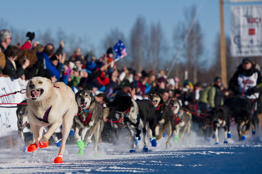 . Dogs in Curt Perano\'s team leave the starting line of the Iditarod Trail Sled Dog Race on Sunday, March 2, 2014, in Willow, Alaska. (AP Photo/Anchorage Daily News, Marc Lester)