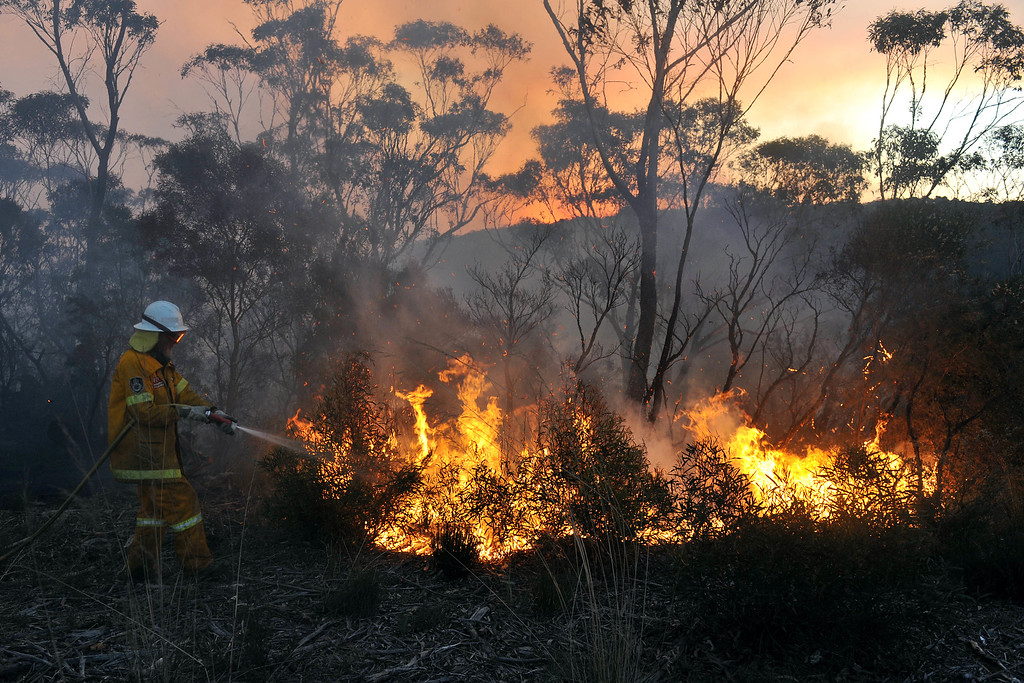 . A New South Wales Rural Fire Service volunteer puts out a fire in the town of Bell, Australia, on Sunday, Oct. 20, 2013. Firefighters battling some of the most destructive wildfires to ever strike Australia\'s most populous state were focusing on a major blaze Sunday. Authorities warned that high temperatures and winds were likely to maintain heightened fire danger for days. (AAP Image/Paul Miller)