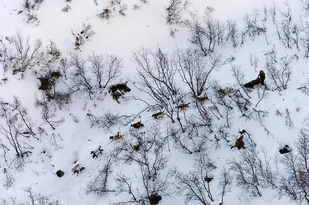 . In this March 3, 2014 photo, a musher drives his dog team down the Dalzell Gorge out of the Rainy Pass checkpoint during the 2014 Iditarod Trail Sled Dog Race near Puntilla Lake, Alaska. (AP Photo/The Anchorage Daily News, Bob Hallinen)