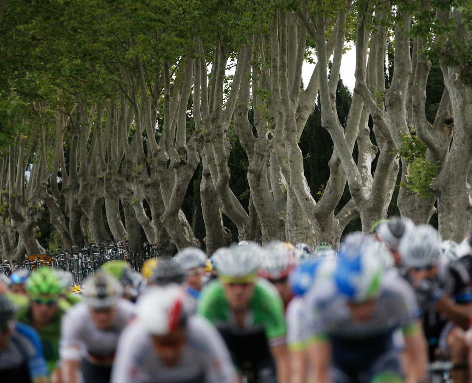 . The pack rides on a road lined with plane trees during the fifteenth stage of the Tour de France cycling race over 222 kilometers (137.9 miles) with start in Tallard and finish in Nimes, France, Sunday, July 20, 2014. (AP Photo/Christophe Ena)