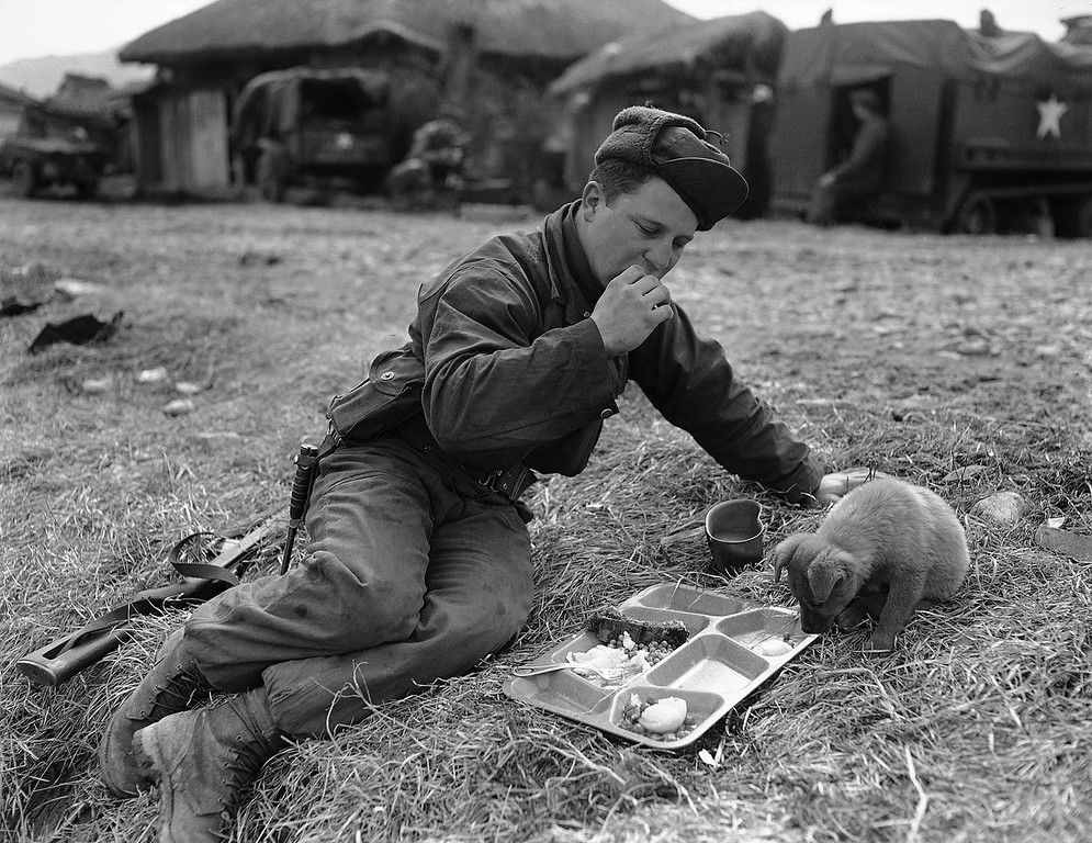 . Pvt. Dick L. Powell, of Findlay, Ohio, and his friend \'Fuzzy\' share a meal near the front in 35th Reg, 25th Div area on March 12, 1951. 8-- Fuzzy looks on hungrily then 9 and 10 he digs in. (AP Photo/James Martenhoff)