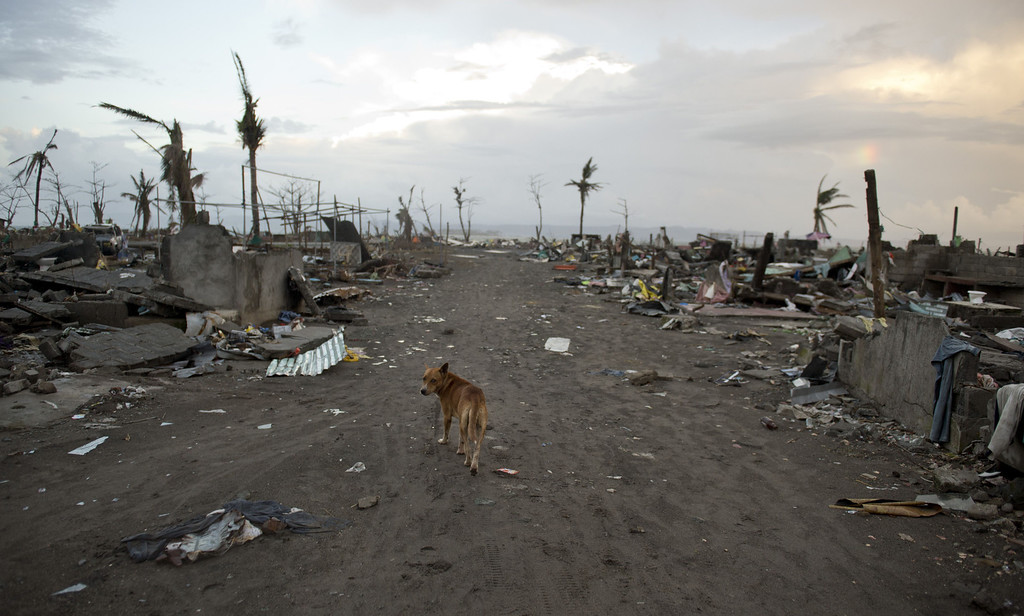 . A dog walks among the rubble of destroyed homes in Tacloban, Philippines on November 21, 2013.    AFP PHOTO / ODD ANDERSEN/AFP/Getty Images