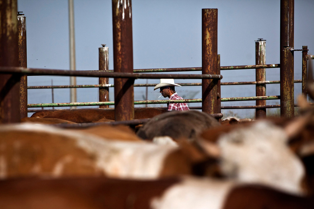 . Alon, an Israeli cowboy, tends cattle on a ranch just outside Moshav Yonatan, a collective farming communit, about 2 km (1 mile) south of the ceasefire line between Israel and Syria in the Golan Heights May 2, 2013.  REUTERS/Nir Elias