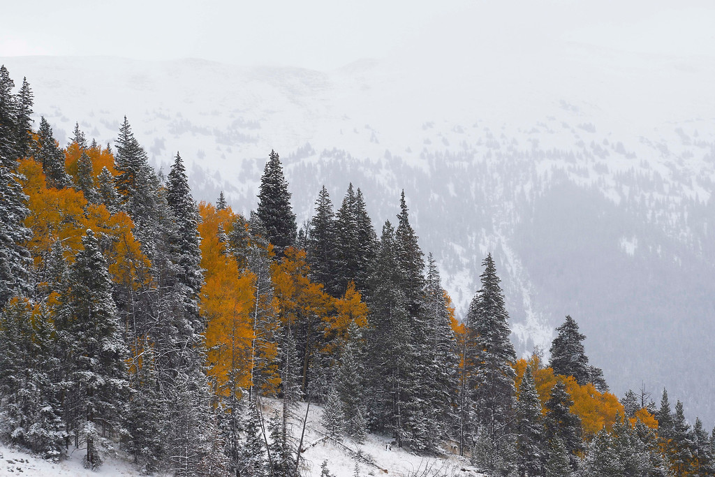 . Fresh snow dusts a mountainside where Aspen trees turn yellow each Autumn, near Copper Mountain, Colo., Friday Oct. 4, 2013. Powerful storms moved into the Midwest on Friday due to a cold weather system gaining strength as it traveled east from Colorado and Wyoming. (AP Photo/Brennan Linsley)