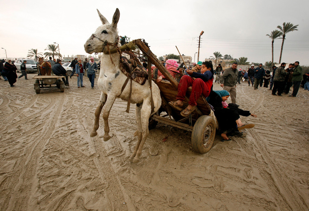 . A Palestinian family falls from a donkey cart after they crossed a breach on the border wall between the Gaza Strip and Egypt January 27, 2008.  REUTERS/Suhaib Salem