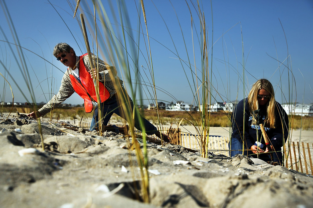 . Members of the Lynch family plant beach grass on protective sand dunes in the Breezy Point neighborhood on the one-year anniversary of Hurricane Sandy on October 29, 2013 in the Queens borough of New York City.   (Photo by Spencer Platt/Getty Images)