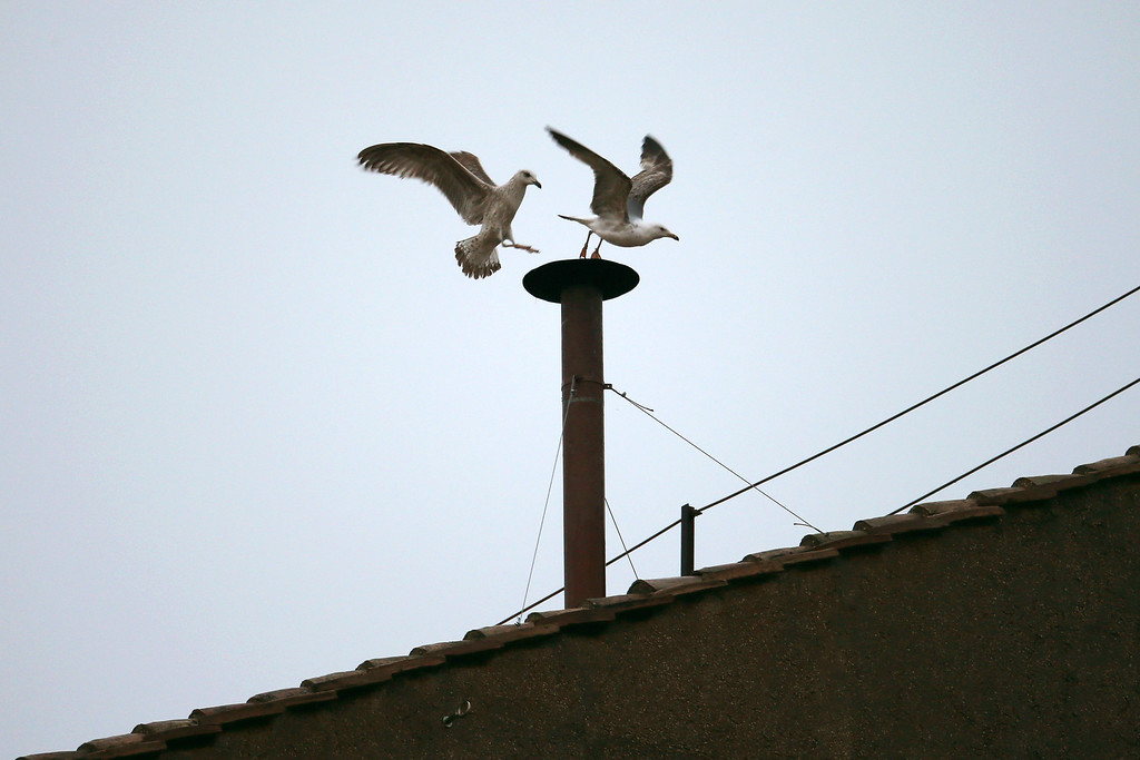 . Birds fly off the chimney on the roof of the Sistine Chapel as the College of Cardinals attempt to elect a new Pope on March 13, 2013 in Vatican City, Vatican.  (Photo by Peter Macdiarmid/Getty Images)