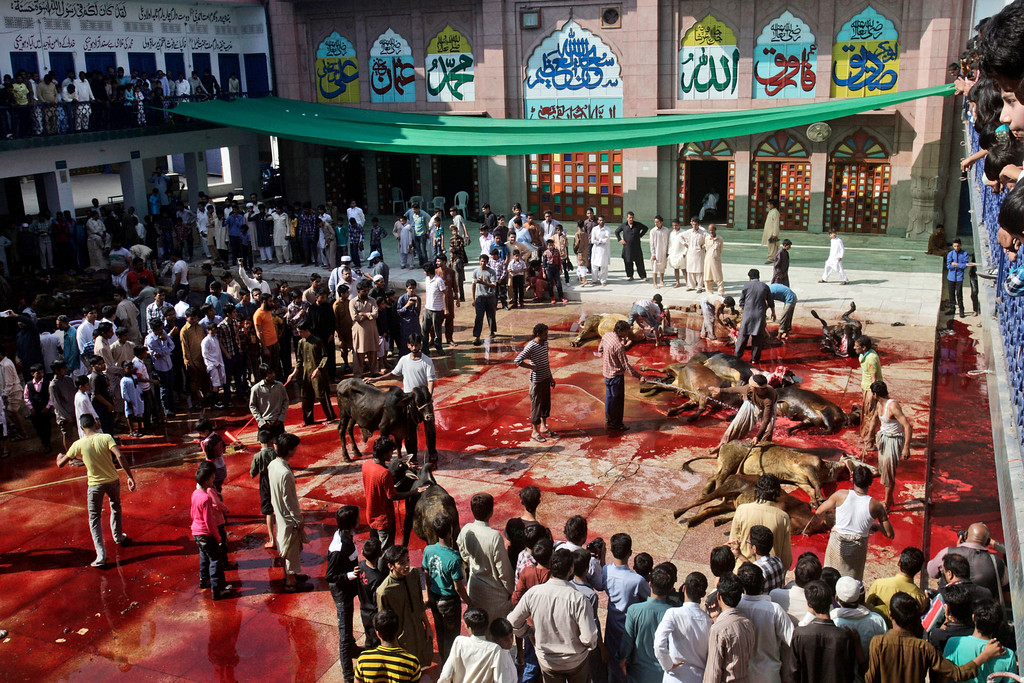 """. Pakistani butchers slaughter cows on the first day of the Muslim holiday of Eid al-Adha, or \""""Feast of Sacrifice,\"""" in Lahore, Pakistan, Wednesday, Oct. 16, 2013.  (AP Photo/K.M. Chaudary)"""