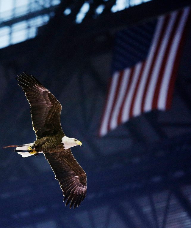 . A bald eagle soars through Lucas Oil Stadium during the National Anthem before an NFL wild-card playoff football game between the Indianapolis Colts and the Kansas City Chiefs Saturday, Jan. 4, 2014, in Indianapolis. (AP Photo/Michael Conroy)