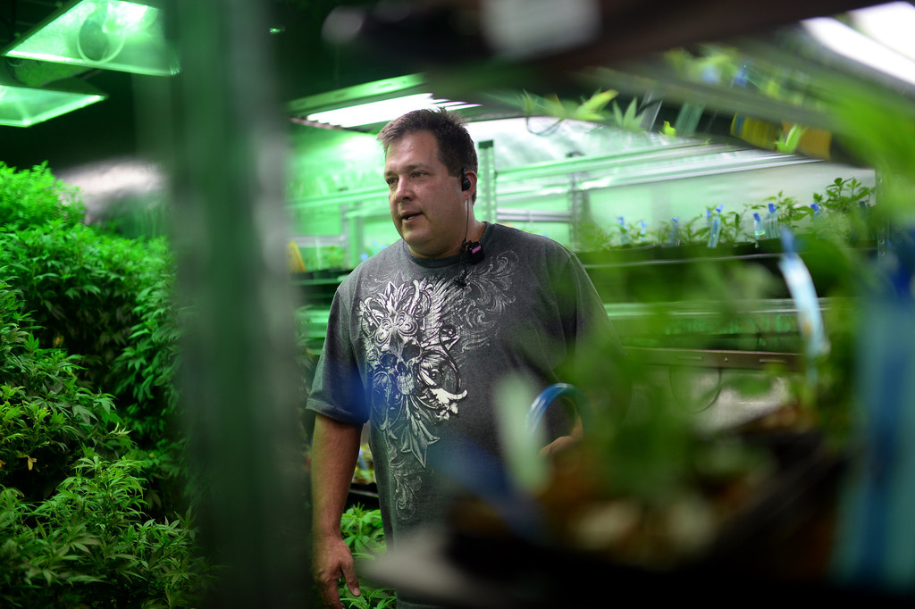 . DENVER, CO. DECEMBER 31: Andy Williams, president of Medicine Man marijuana dispensary, checks the Radio Frequency Identification tags and counting numbers on his plants in Denver, Colorado December 31, 2013. (Photo by Hyoung Chang/The Denver Post)