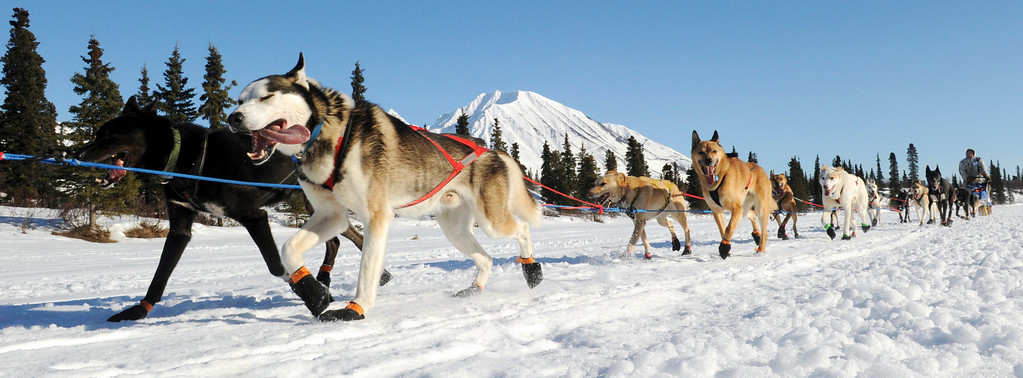 . In this March 3, 2014 photo, Ramey Smyth drives his dog team into the Rainy Pass checkpoint during the 2014 Iditarod Trail Sled Dog Race near Puntilla Lake, Alaska. (AP Photo/The Anchorage Daily News, Bob Hallinen)