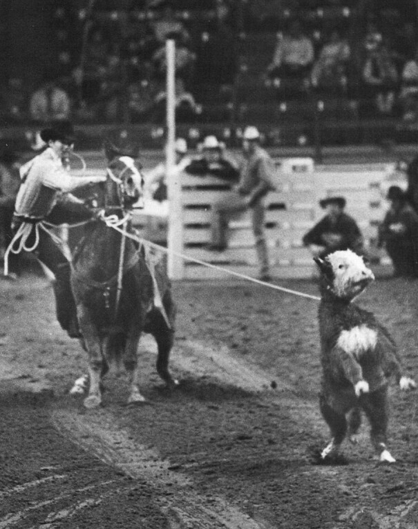 . National Western Stock Show (Gen) Calf Roping Dean Mc Mullan, San Angelo, Tex, time in a time of 12.6. 1976. Steve Larson, The Denver Post