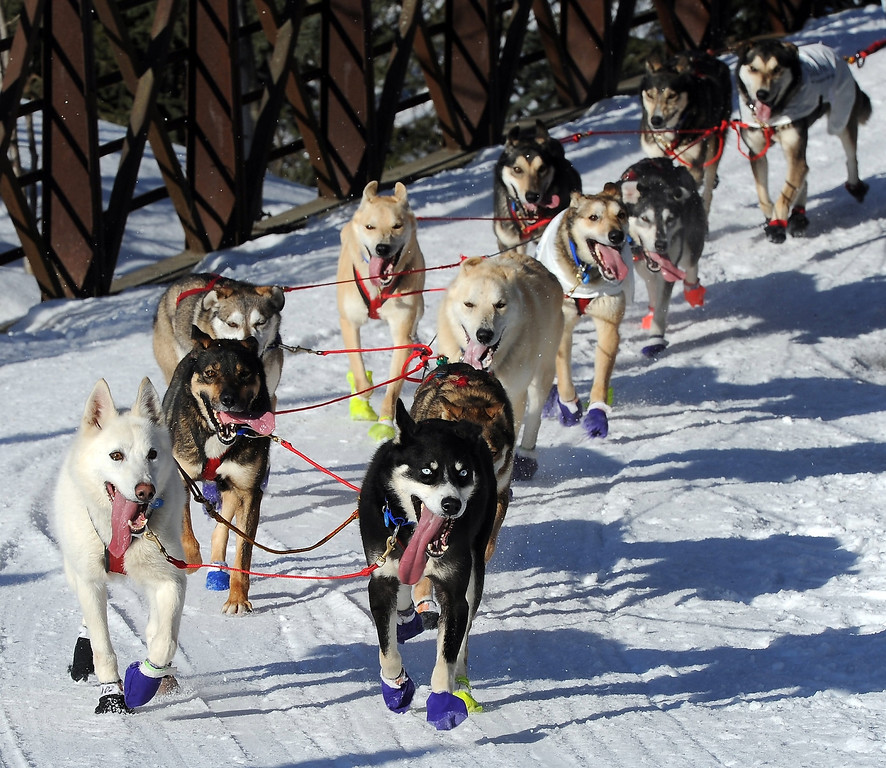 . The dogs of Marcelle Fressineau of Whitehorse, Yukon Territory, Canada, trot down the Chester Creek trail during the ceremonial start for the 2014 Iditarod Trail Sled Dog Race on Saturday, March 1, 2014, in Anchorage, Alaska. (AP Photo/The Anchorage Daily News, Erik Hill)