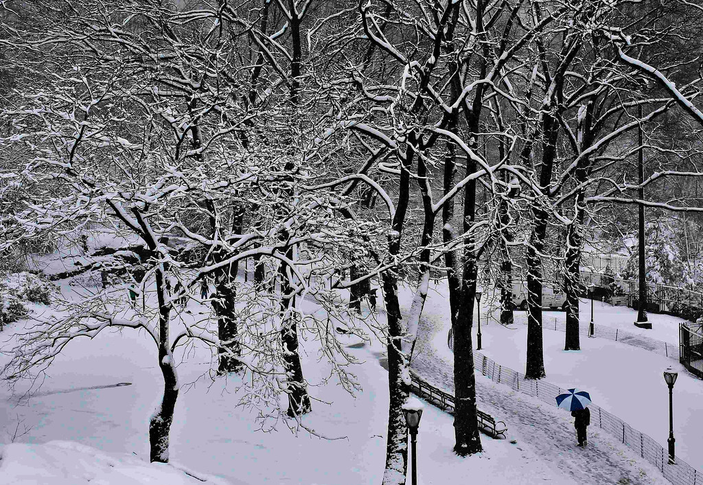 . A man walks through Central Park in the snow in New York March 8, 2013. REUTERS/Shannon Stapleton