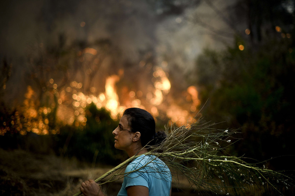 . A local stands with a branch in her hand during a wildfire in Caramulo, central Portugal on August 29, 2013. Five Portuguese mountain villages were evacuated overnight as forest fires intensified in the country\'s north and centre, officials said today. As many as 1,400 firefighters were dispatched Thursday to tackle the blaze in the mountains and another raging further north in the national park of Alvao, where 2,000 hectares (4,900 acres) of pine forest have already been destroyed, according to the local mayor.   PATRICIA DE MELO MOREIRA/AFP/Getty Images