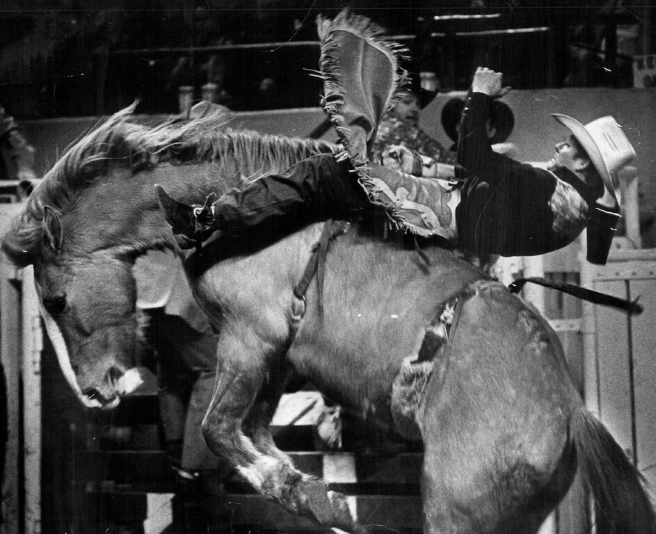 . Jack Ward,  of Springdale, Ark., hangs tightly to his bareback Bronc as he rides to a second-place score in Monday night\'s event at National Western Stock Show Rodeo. He rode Geisha Girl to 72 points behind Mickey Young, Wellington, Utah, who scored 78 points for top score. 1976. John J. Sunderland, The Denver Post