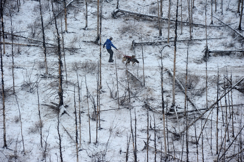 . A musher and two dogs walk the trail in the middle of the Farewell Burn during the Iditarod Trail Sled Dog Race on Tuesday, March 4, 2014. The rest of his team waited along the trail less then a mile ahead of him.  (AP Photo/The Anchorage Daily News, Bob Hallinen)