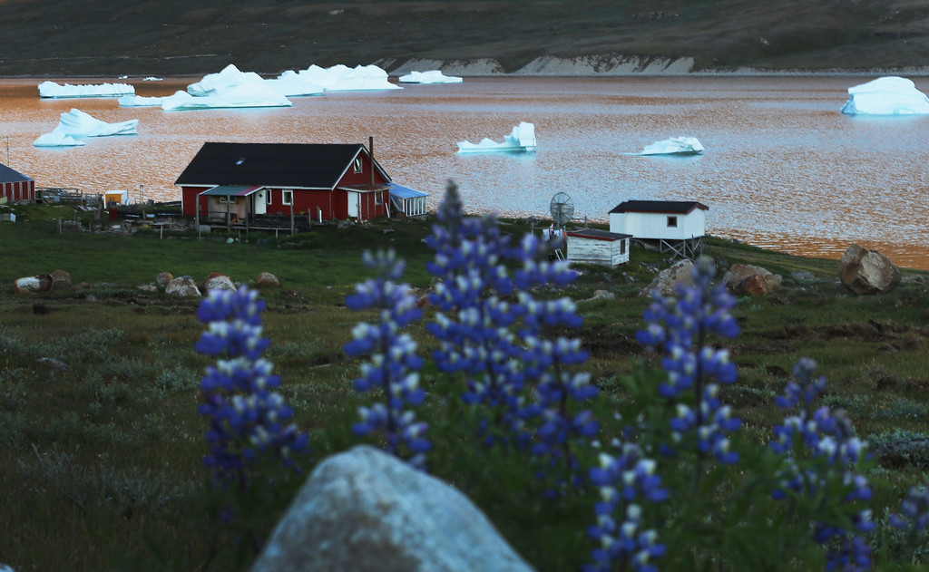 . Icebergs and flowers are seen near the home of potato and sheep farmer Otto Nielsen on July 30, 2013 in Qaqortoq, Greenland. Nielsen said that even though this summer has not been as warm as last year, the climate change has extended crop growing season.   (Photo by Joe Raedle/Getty Images)