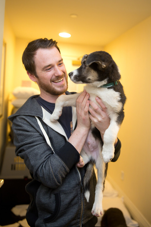 . In this image released on Friday, March 14, 2014, 2014 Winter Olympic medalist Gus Kenworthy\'s Dogs from Sochi arrive in New York City. Robin Douglas Macdonald prepares appointments at the veterinarian for the dogs. (Christopher Lane/AP Images for Humane Society International)