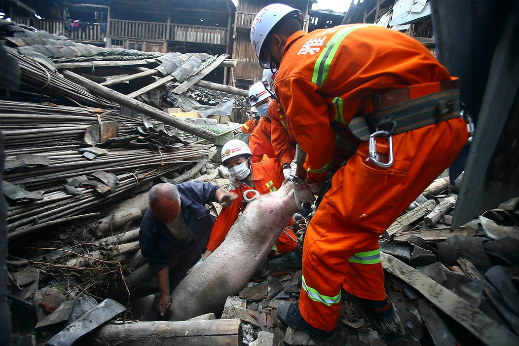 . Rescue workers help pull out a pig from the rubble after a strong 6.6 magnitude earthquake hit the remote, mostly rural and mountainous Lushan county, Ya\'an, Sichuan province, April 20, 2013. The earthquake on Saturday killed at least 156 people and injured about 5,500 close to where a big quake killed almost 70,000 people in 2008. REUTERS/Stringer
