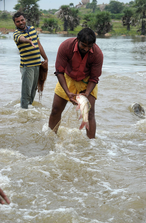 . Indian villagers catch fish in the floodwaters following heavy monsoon rain in the Hayat Nagar district, on the outskirts of Hyderabad on October 26, 2013.  Torrential rains made rivers spill their banks in India\'s eastern coastal states of Orissa and Andhra Pradesh, forcing thousands to flee their homes and seek refuge in shelters, two weeks after India\'s most severe cyclone in 14 years lashed the coastline.  NOAH SEELAM/AFP/Getty Images