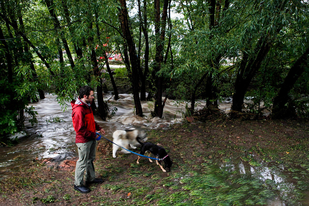 . BOULDER, CO - SEPTEMBER 12: Jesse Sholinsky walks his dogs along Bear Creek, which flooded early today after three days of heavy rainfall September 12, 2013 in Boulder, Colorado. An estimated 6-10 inches of rain fell in 12-18 hours and more is expected throughout the day. Flash flood sirens warned people to stay away from Boulder Creek and seek higher ground.  (Photo by Dana Romanoff/Getty Images)
