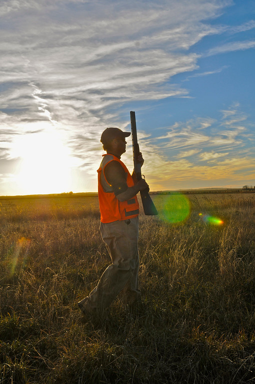 . Jim O\'Neal of Tiburon, Calif., hunts for pheasants as the sun sets on a picture-perfect opening day Saturday, November 9, 2013. O\'Neal and his son, John, made the trip back to the family farm near Holyoke for the annual hunt. Scott Willoughby, The Denver Post