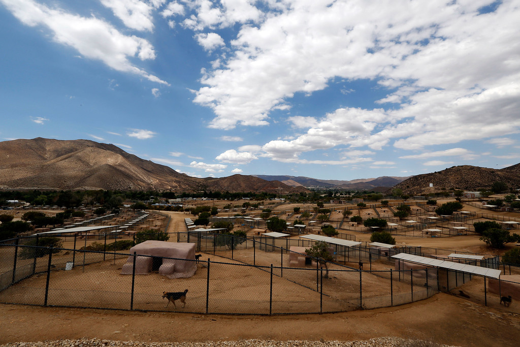 . An overview of Leo Grillo\'s DELTA (Dedication & Everlasting Love to Animals) Rescue complex in Acton, Calif.  Aug. 29, 2013. (AP Photo/Reed Saxon)
