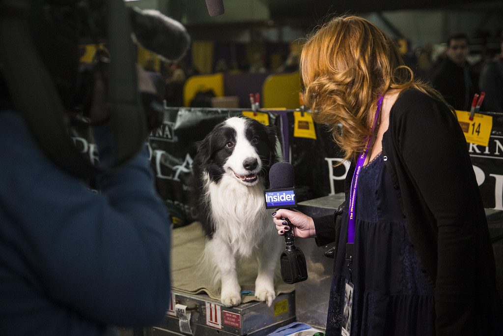 . A woman interviews a dog during the 138th annual Westminster Dog Show at the Piers 92/94 on February 10, 2014 in New York City. The annual dog show showcases the best dogs from around world for the next two days in New York.  (Photo by Andrew Burton/Getty Images)